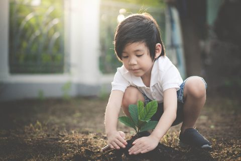 Child planting a tree